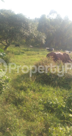 Land for sale Mbarara Western - 1