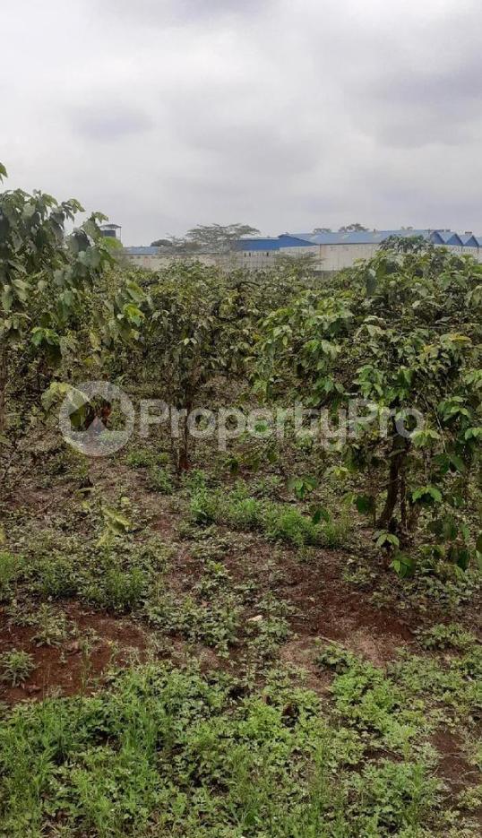 Residential Land for sale Thika Superhighway Ruiru Ruiru Kiambu - 5