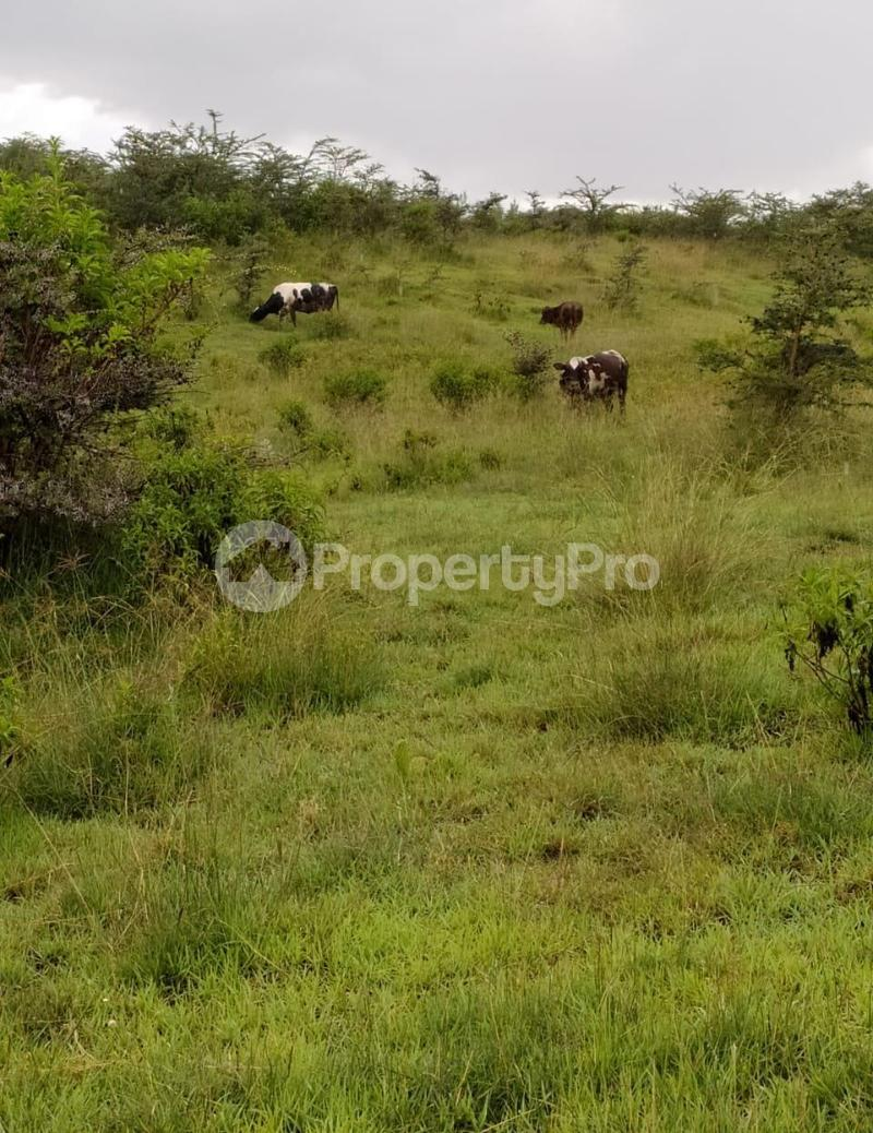 Land for sale Naivasha, Naivasha Naivasha Naivasha - 5