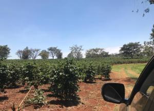 Land for sale Thika Rd, Mangu, Juja Mangu Juja