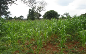 Land for sale Kamuli Eastern