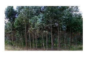 Commercial Properties for sale Laikipa East Laikipia