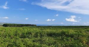 Land for sale Jinja Iganga Highway Bugembe Jinja Eastern