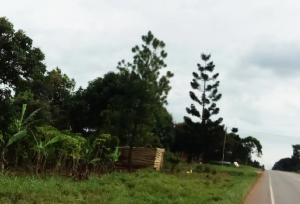 Land for sale Lwengo Central
