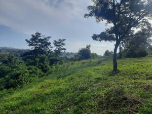 Land for sale Bujagali Buwenda Road Jinja Eastern