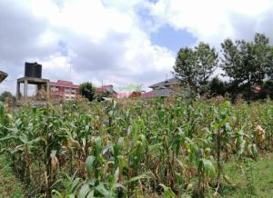 Land for sale Kikuyu, Thogoto Thogoto Kikuyu