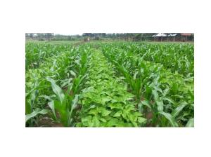 Agricultural Land for sale Mathira Nyeri