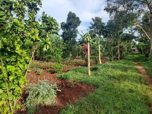 Land for sale Kamuli, Lwanda Jinja Eastern