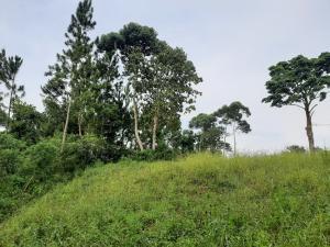 Land for sale Kibibi Jinja Uganda Jinja Eastern