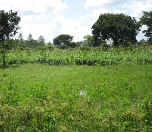 Land for sale Iganga Eastern