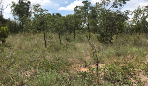 Farm & Agricultural land Land for sale Harare South Harare