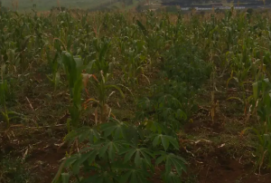Land for sale Wakiso Central