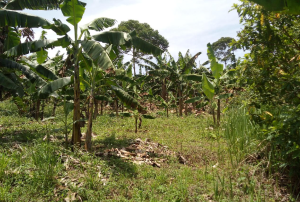 Land for sale Kayunga Central