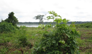 Land for sale Gulu Northern