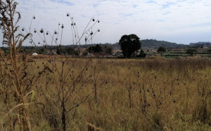 Stands & Residential land Land for sale The grange Belgravia Harare North Harare