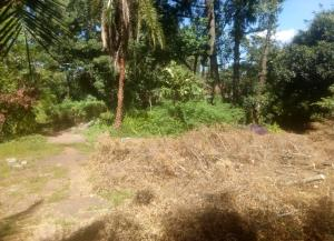 Land for sale Naivasha Ave Muthaiga, Muthaiga, Nairobi Muthaiga Nairobi