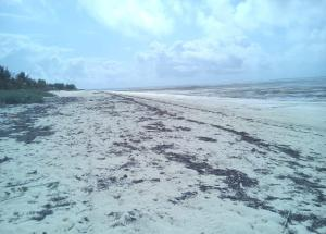 Land for sale Watamu, Watamu Watamu Watamu