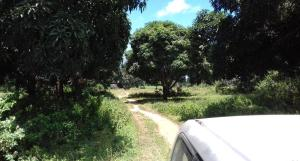 Farm for sale Malindi Next to Msabaha. , Malindi, Malindi Malindi Malindi