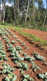 Land for sale Kisumu, Kisumu CBD Kisumu CBD Kisumu