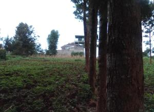 Land for sale Elizabeth Street, kiamumbi, Kiamumbi, Nairobi Kiamumbi Nairobi
