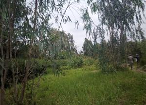 Land for sale Nairobi, Garden Estate Garden Estate Nairobi
