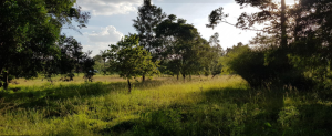 Land for sale Kiambu Road a 3 Kiambu Road Kiambu Road Nairobi