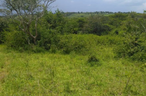 Land for sale Nakasongola Central