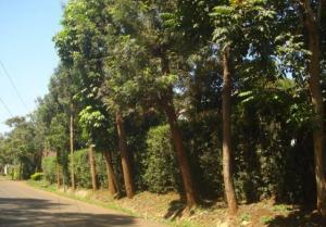 Land for sale Coffee Garden Road, Muthaiga, Nairobi Muthaiga Nairobi