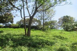 Land for sale Red Hill Dr Kitisuru, Nyari, Nairobi Nyari Nairobi