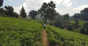 Land for sale Limuru, Tigoni Tigoni Limuru