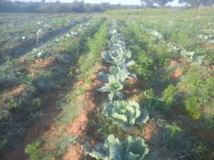 Stands & Residential land Land for sale Harold road  Umguza Bulawayo North Bulawayo