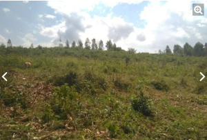 Land for sale Kisumu, Ojola kisumu Central Kisumu