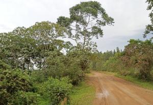 Land for sale Masaka Central