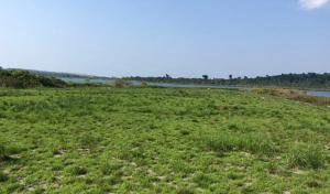 Land for sale Kalangala Central
