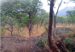Land for sale Mutare Manicaland