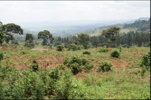 Land for sale bujjuko Kampala Central
