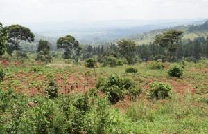 Land for sale mityana Kampala Central