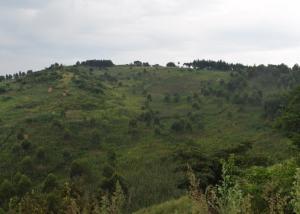 Land for sale mityana Kasanda Central