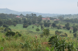 Land for sale Nakaseke Central