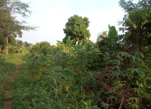 Land for sale Kampala Central