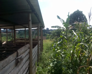 Commercial Property for sale Luweero Central