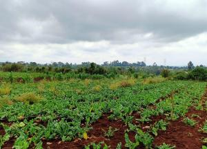 Land for sale Ngecha Kabuku Road, Redhill, Nairobi Redhill Nairobi