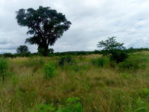 Farm & Agricultural land Land for sale Chicago Kwekwe Midlands