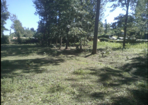 Land for sale - Tigoni Limuru