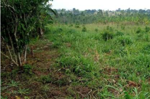 Land for sale - Mityana Central