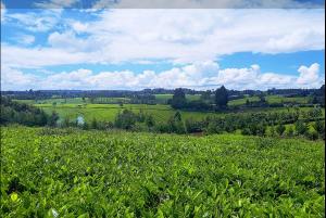 Land for sale ... Tigoni Limuru