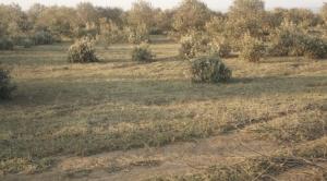Agricultural Land for sale Mbirikani/Eselenkei Kajiado