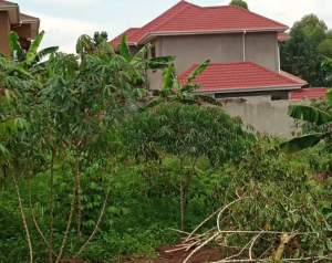 Land for sale Kalungu Central