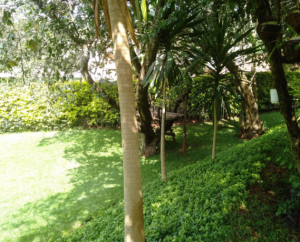 Residential Land for sale Kileleshwa Nairobi