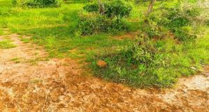 Land for sale Ruiru Kiambu County, Ruiru, Ruiru Ruiru Ruiru